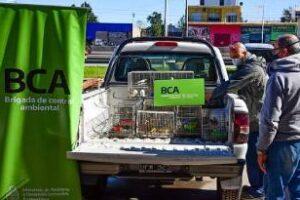 Brigada de Control Ambiental rescató aves víctimas del tráfico